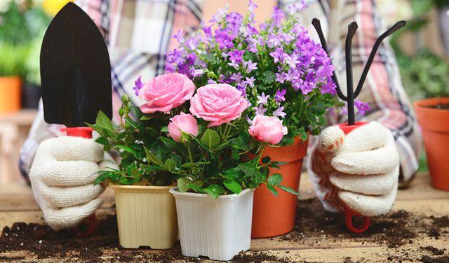 уход за декоративно цветущими