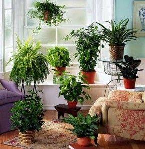 Домашняя оранжерея для занятых и ленивых
