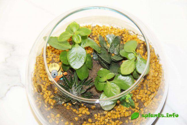 Флорариум: миниатюрный сад в бутылке