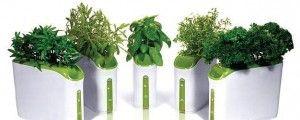 Выращивание растений методом гидропоники