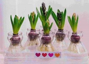 Как разместить цветы дома?