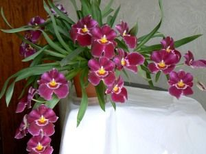Комнатные орхидеи уход