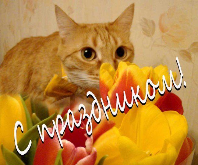 Кот-цветовод: как сохранить цветы в вазе подольше