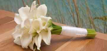 Букет из калл. #1. 30.09.2015, 19:31. Как ведущая ни разу не встречала у невест букетов из этих прекрасных цветов, а мне они очень нравятся, поэтому когда я выходила замуж то Снежана Елистратова, нежно и красиво! Стильный букетик!!!