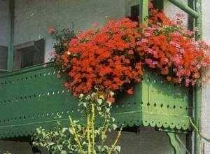 Как правильно озеленить балкон