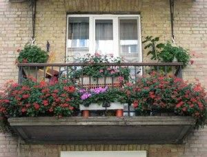 Как красиво и грамотно озеленить балкон