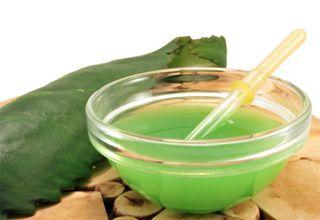 Полезные свойства сока каланхоэ