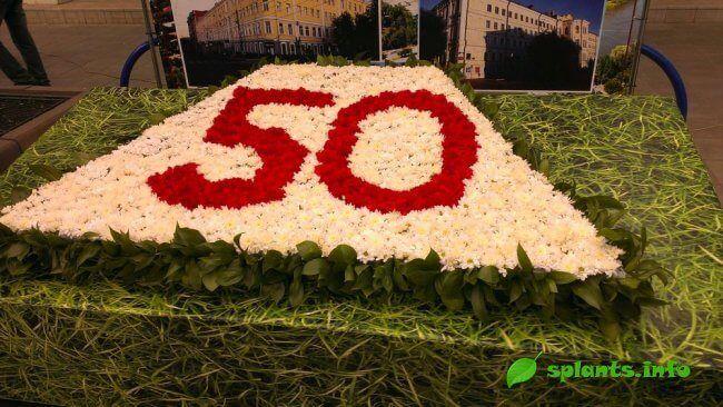 Праздник цветов в оренбурге. 2015