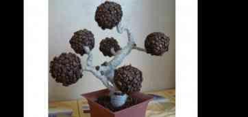 Страна мастеров кофейное дерево своими