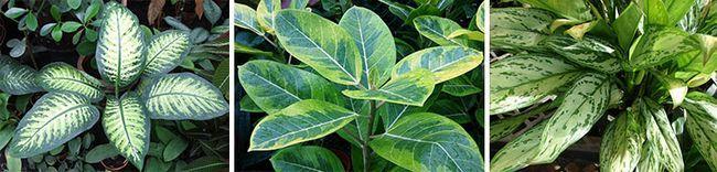 Удобрения для декоративно-лиственных растений