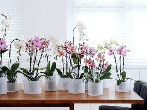 Уход и пересадка орхидей