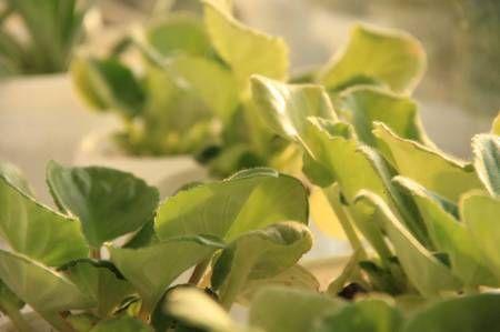 Уход за комнатными растениями осенью