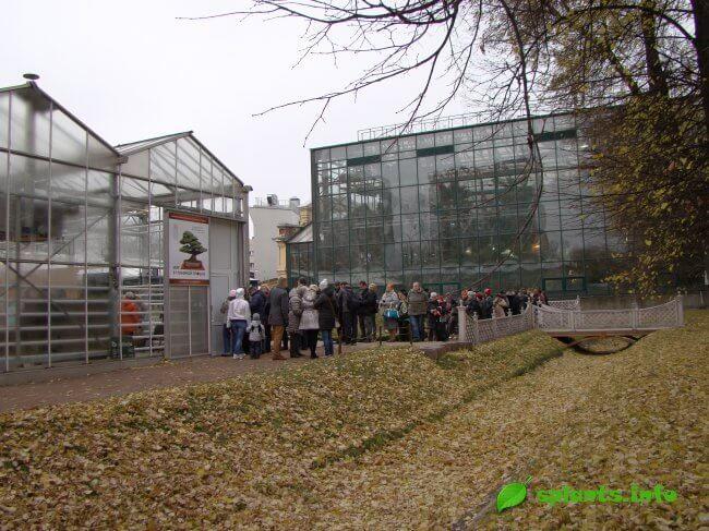 Выставка японских бонсай открылась в ботаническом саду мгу